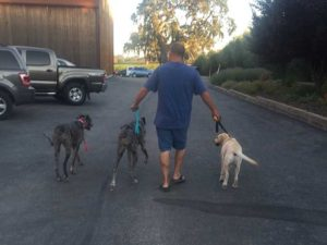 On-leash pack walk with no pulling or lunging!