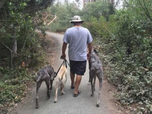 Going for a pack walk during a Board and Train outing!