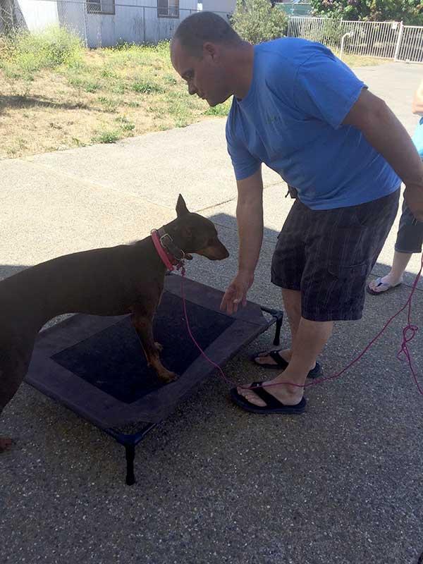 Dog Training in San Luis Obispo | DognPooch | Family Dog